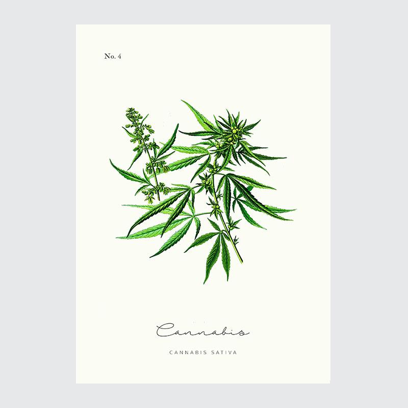 Cannabis Plakat Vintage Do Kuchni