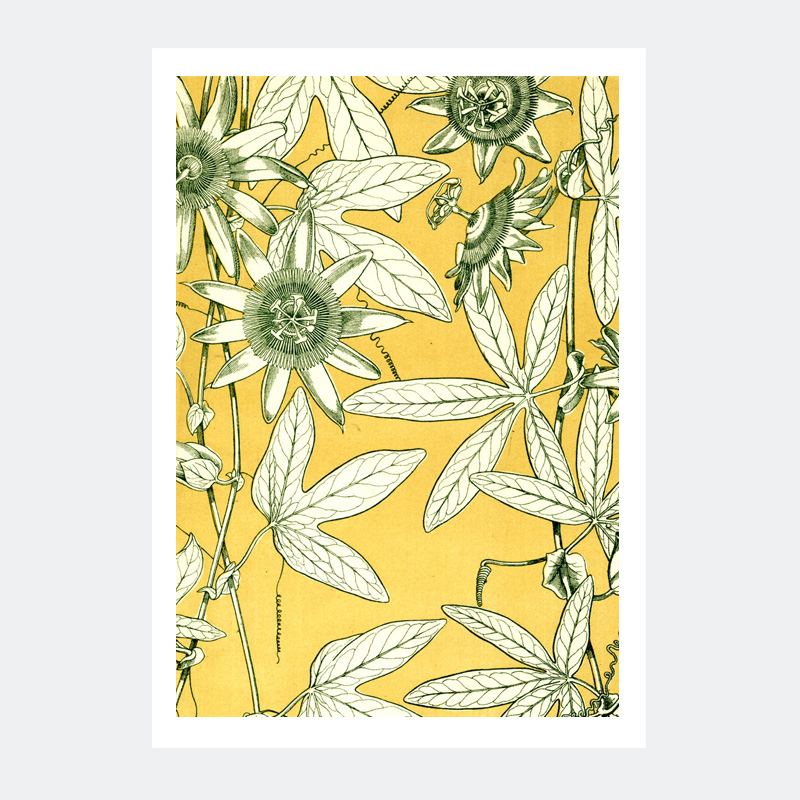 Plakat Vintage Botanika (02)