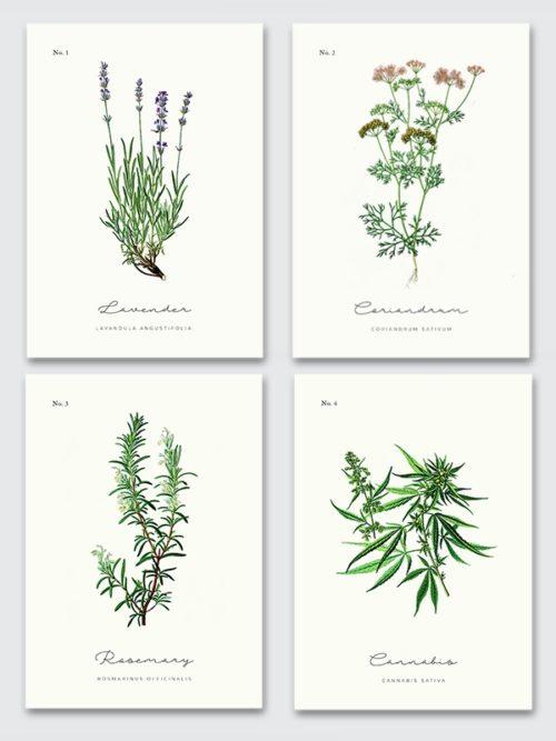 Zestaw plakatów z ziołami do kuchni