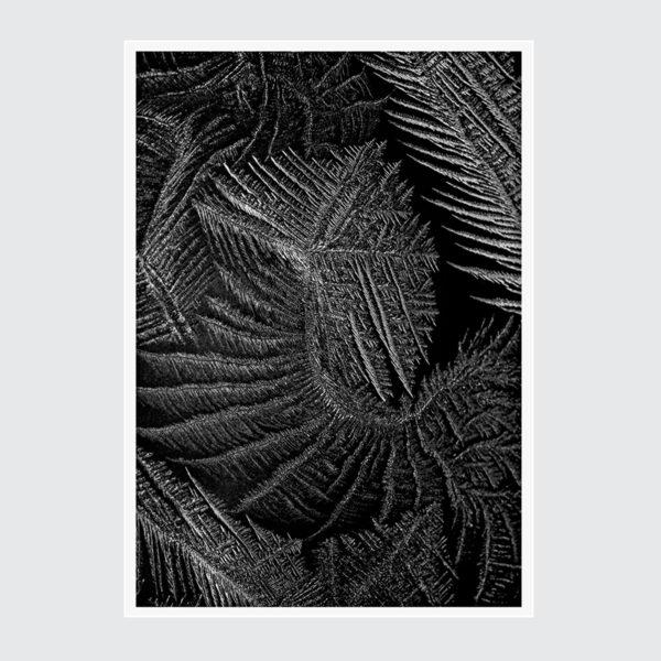 Organic ART Plakat Dekoracyjny Monochromatyczny