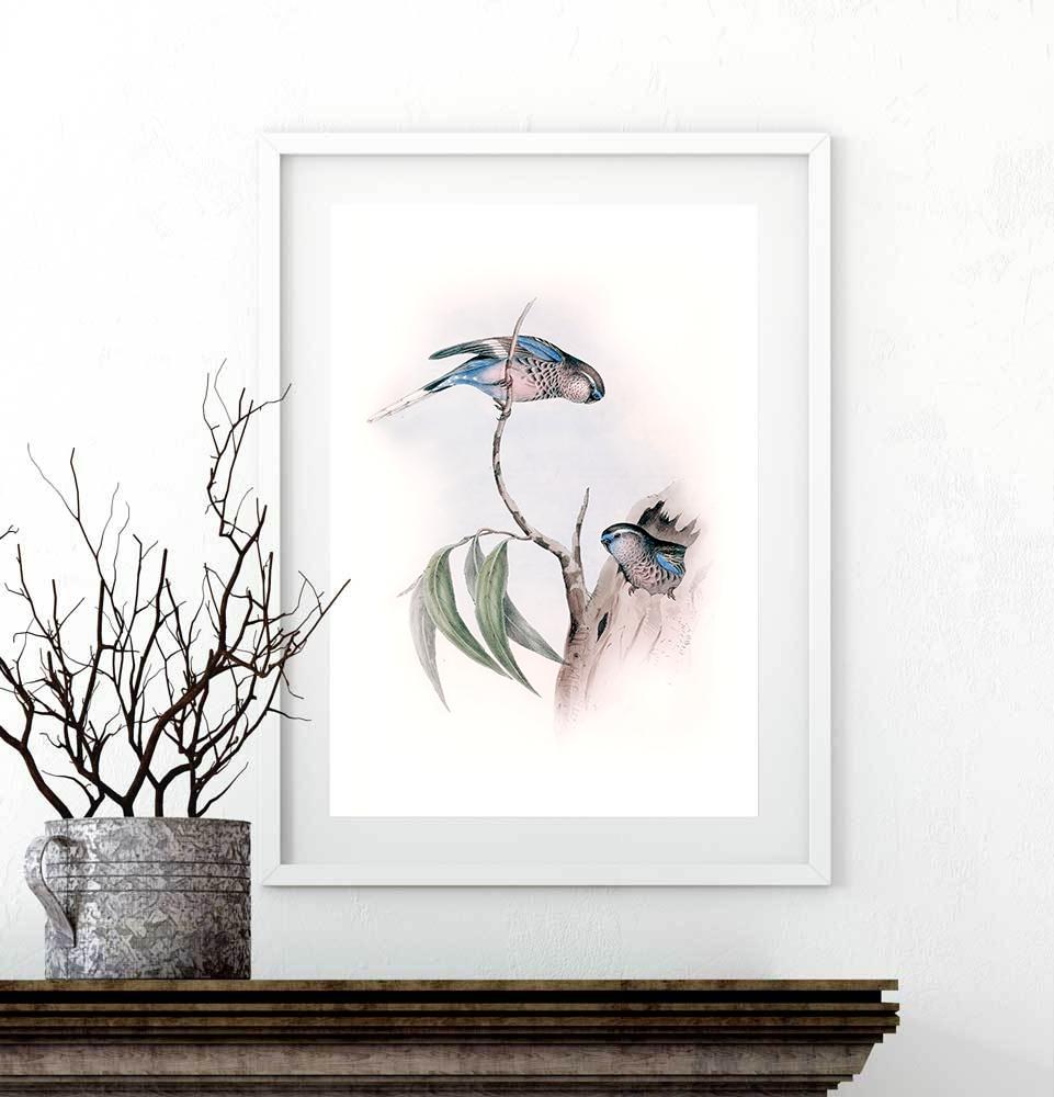 Plakat papużki niebieskie
