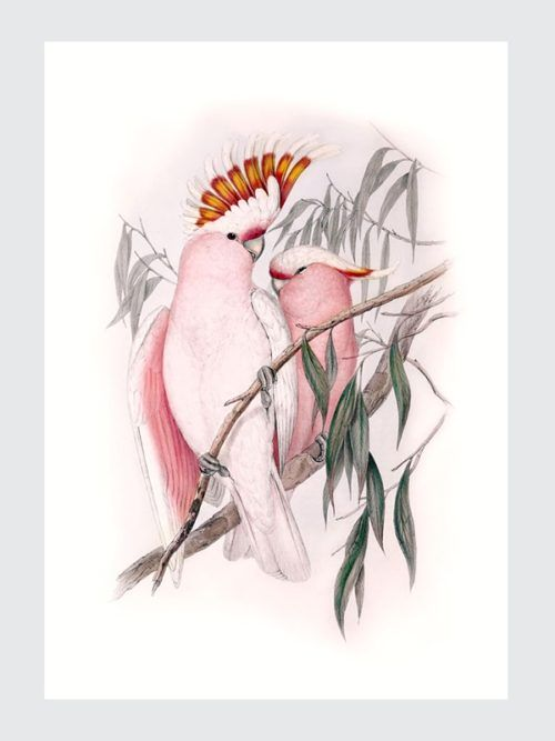 Plakat Ilustracja Vintage Kakadu do pobrania