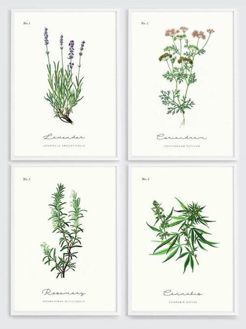 Plakaty z ziołami: Zestaw 4 plakatów z ziołami w ramie