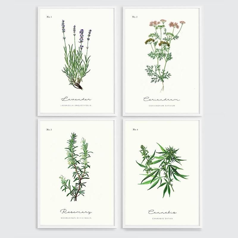 Zestaw 4 plakatów z ziołami w ramie