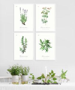 Gallery wall z ziołami