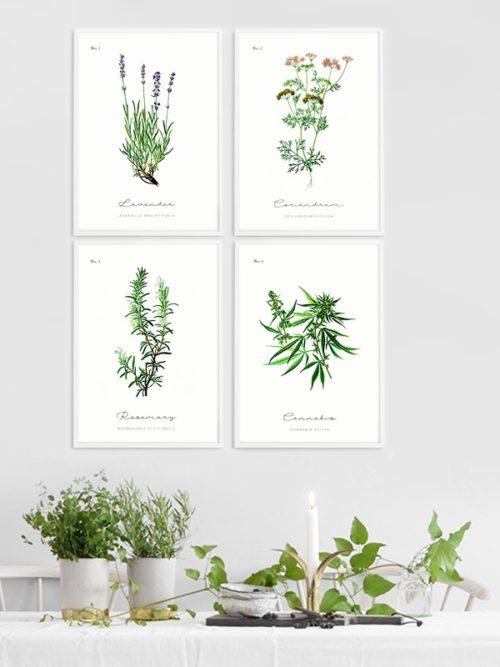 Gallery wall z ziołami Plakaty z ziołami - Zestaw 4 plakatów w ramkach