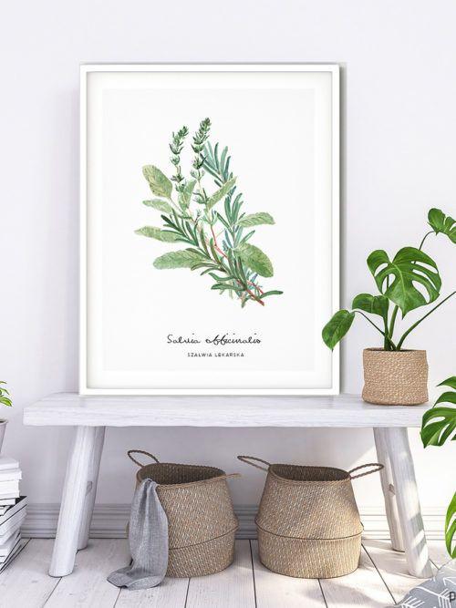 Plakat Szałwia lekarska w ramie. Plakat z naszej kolekcji ZIOŁA. Oprawiony w ramkę. Gotowy do powieszenia na ścianie. Idealna dekoracja do kuchni, ale też doskonałe uzupełnienie klimatu pokoju dziennego lub sypialni.