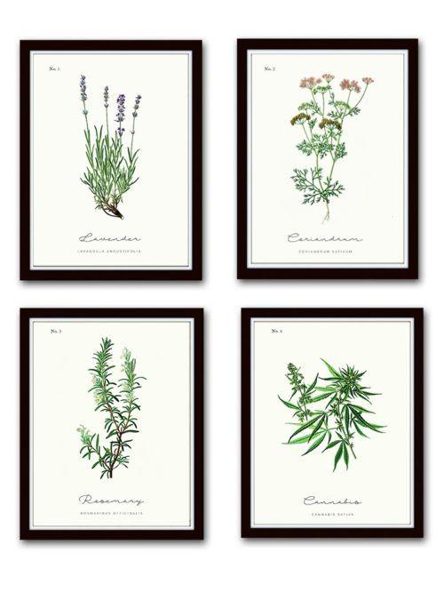 plakaty z ziołami plakat vintage z ziołami w ramkach obrazy kwiaty zioła vintage