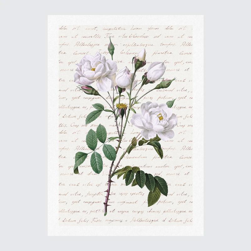 obrazy róże obraz roze plakat kwiaty wintage róże obraz