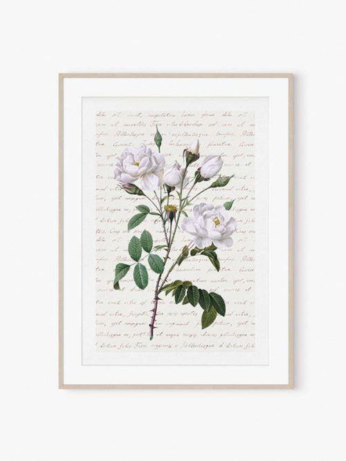 róże obraz obrazy kwiaty róże plakat vintage w ramie